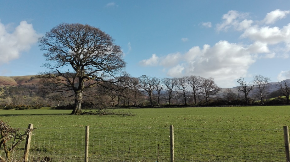 Oak saved by locals in Lake District