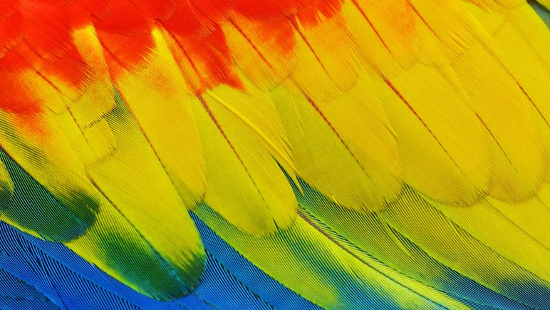 colourful feather