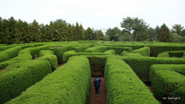 picture of an a-maz-ing maze