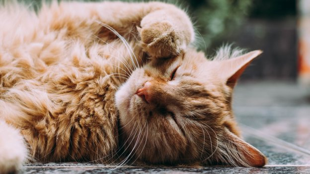 Cat lying on their side with a paw on their face